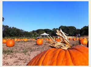 2014-10-16_11-47-25